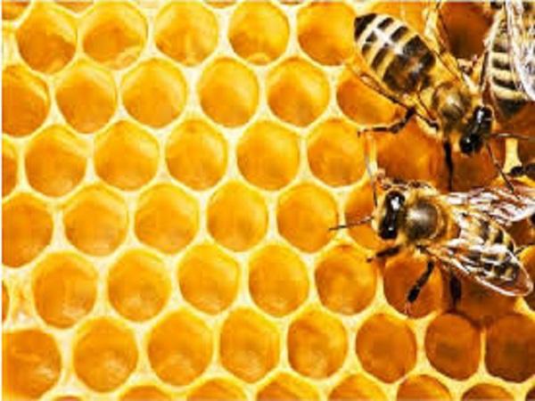mơ thấy tổ ong