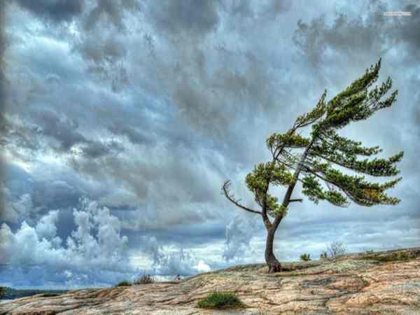 Mơ thấy gió